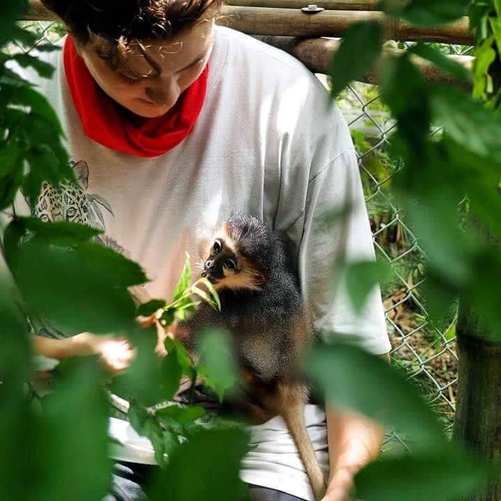 Centre de sauvetage des primates en voie de disparition