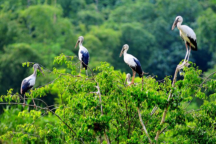 Jardin d'oiseaux de Thung Nham
