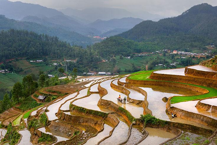 Le meilleur moment pour visiter la vallée de Muong Hoa Sapa