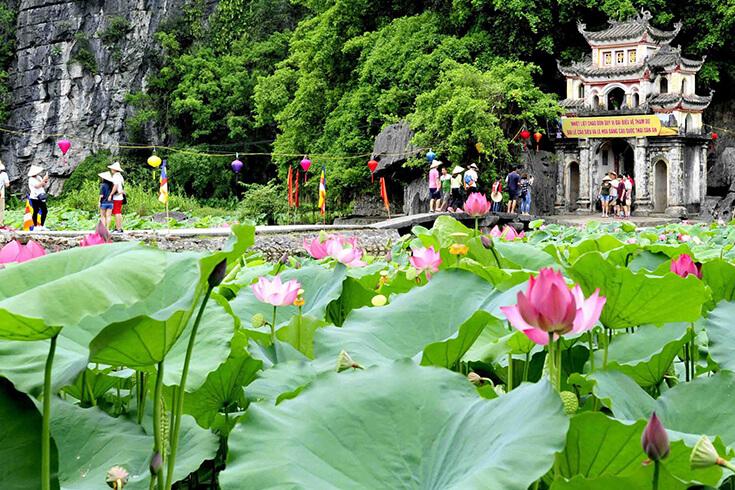 Le meilleur moment pour voir de milliers de fleurs de lotus