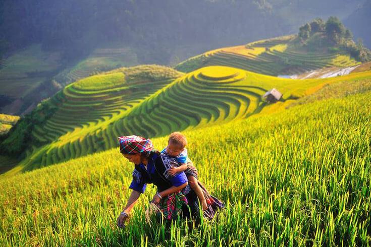 Mi-septembre à début décembre – Le meilleur moment pour visiter les rizières de Sapa