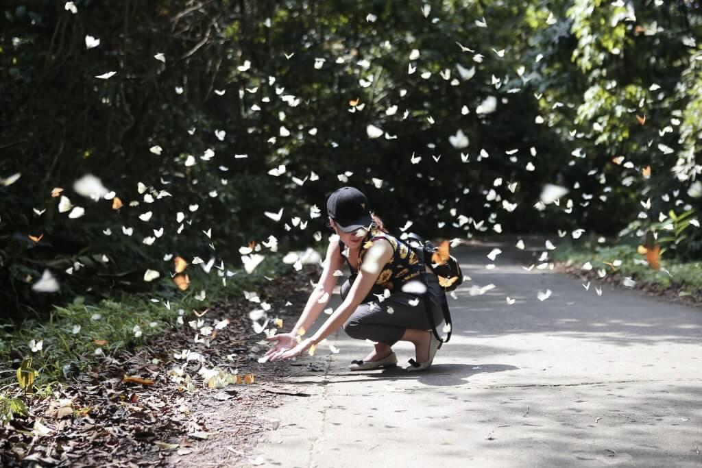 Parc national de Cuc Phuong en saison des papillons