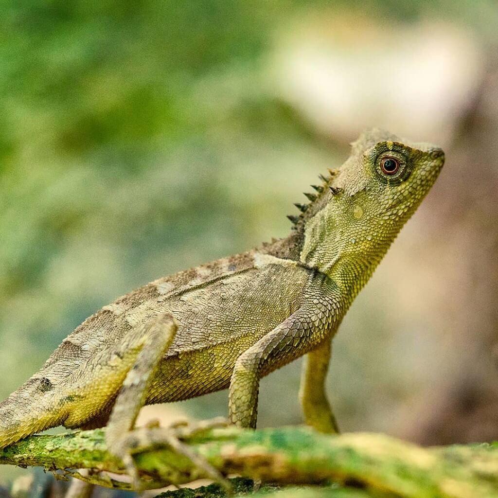 Reptile rare au parc Cuc Phuong