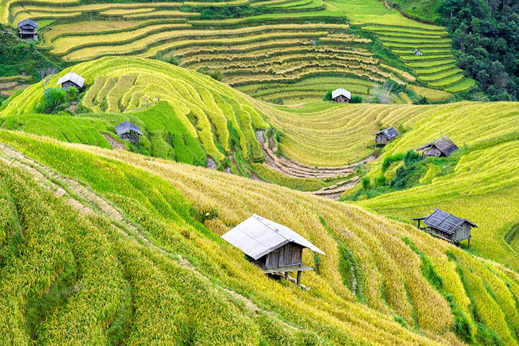 Trek aux villages Lao Chai et Ta Van