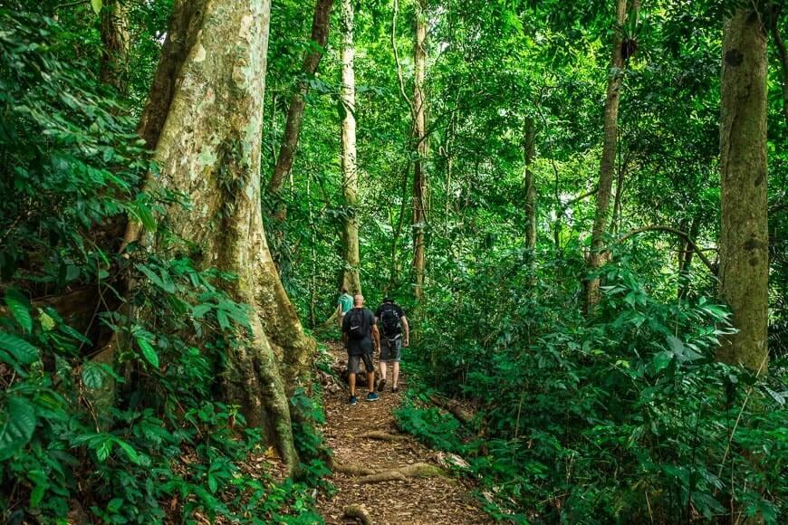 Trekking au parc national de Cuc Phuong dans la forêt primaire