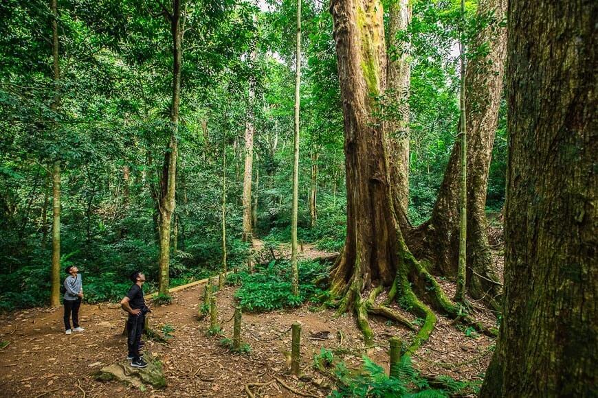 Un arbre millénaire