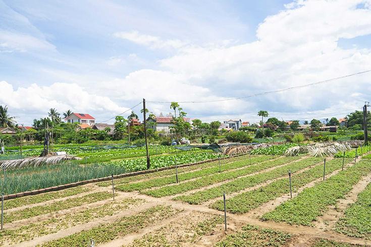 Histoire du village de légumes de Tra Que