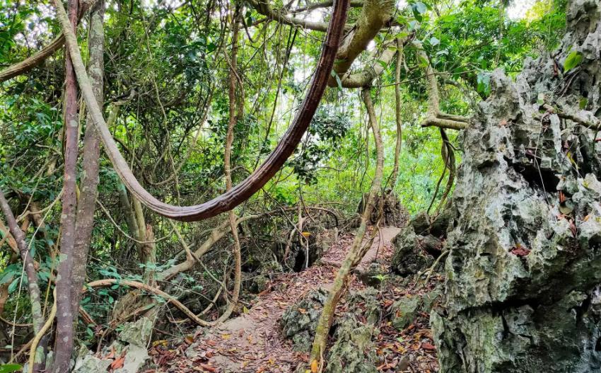 Ecotourisme forestier