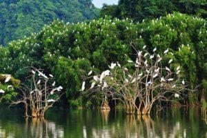 Parc ornithologique Thung Nham ninh binh
