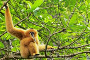 guide complet du parc national de Cuc Phuong ninh binh